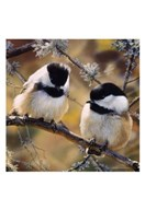 In the Black - Black Capped Chickadees (detail) Fine-Art Print