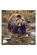 Trailblazer - Grizzly Bear (detail) Fine-Art Print