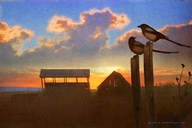 Magpies At Sunset Fine-Art Print