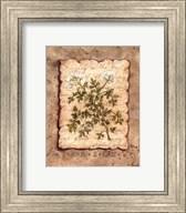 Vintage Herbs - Parsley Fine-Art Print