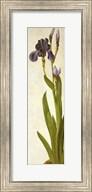 An Iris Fine-Art Print