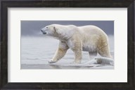 Arctic Icon Fine-Art Print