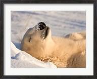 Sleeping Polar Bear Fine-Art Print