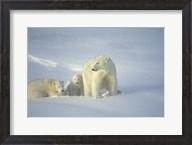 Polar Bear and Cubs Fine-Art Print