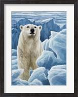 Ice Bear Polar Bear Fine-Art Print