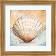 Seashell Collection III Fine-Art Print