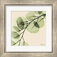 Mint Eucalyptus 1 Fine-Art Print
