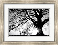 Old Tree Fine-Art Print