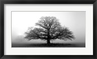 Tree In The Mist Fine-Art Print