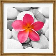 Zen Flower Fine-Art Print