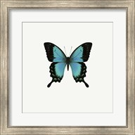 Blue Butterfly Fine-Art Print