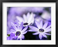 Purple Flowers Fine-Art Print