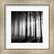 Wood Light Fine-Art Print