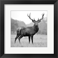 Proud Deer Fine-Art Print