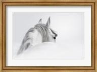 White Horse Fine-Art Print