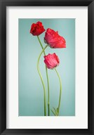 Blue poppy Fine-Art Print