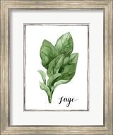 Watercolor Herbs VI Fine-Art Print