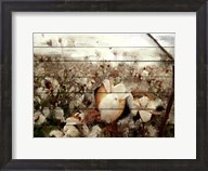 Cotton Field 1 Fine-Art Print