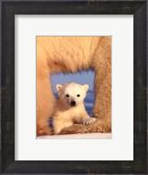 Polar Bear Cub Fine-Art Print