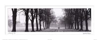 Avenue of Trees BW Framed Print