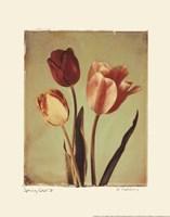 Spring Color II Framed Print