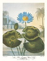 The Blue Egyptian Water-Lily Framed Print