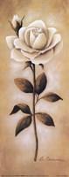 White Roses I Framed Print
