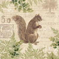 Woodland Trail III (Squirrel) Framed Print