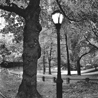 A Light in Central Park Framed Print