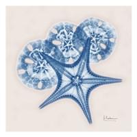 Cerulean Starfish and Sand Dollar Framed Print