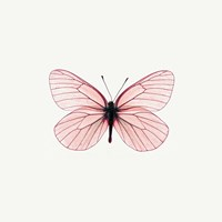 Pink Butterfly Framed Print