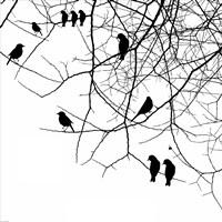 Bird II Framed Print