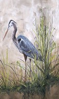 In The Reeds - Blue Heron - B Framed Print