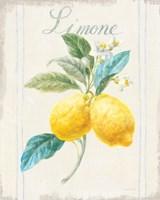 Floursack Lemon III v2 Framed Print