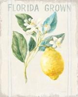 Floursack Lemon I v2 Framed Print